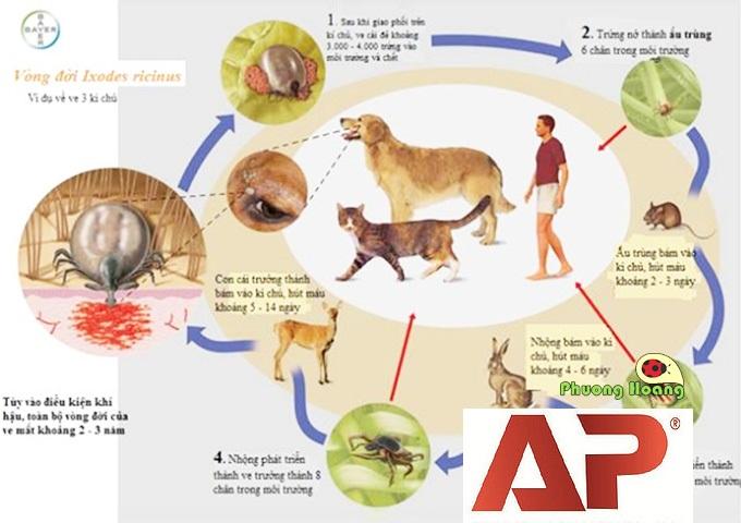 Cách diệt ve chó tận gốc