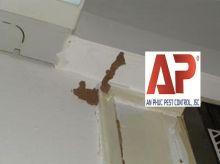 Diệt mối trong tường nhà